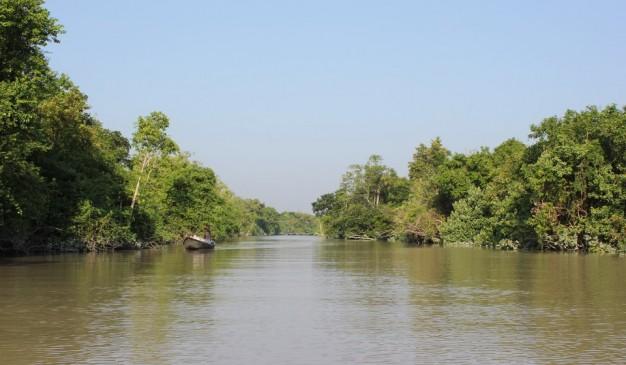 image of Forest of Tengragiri