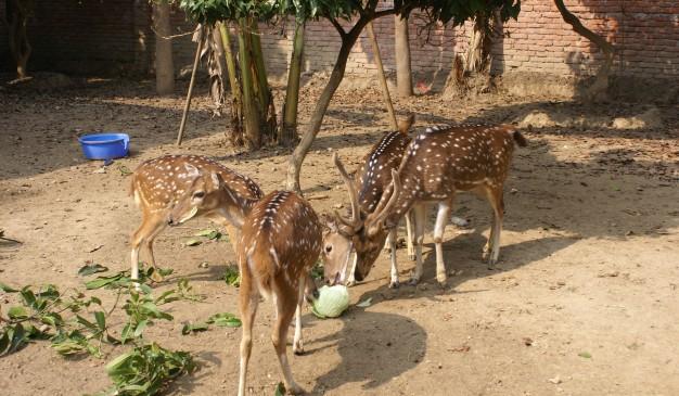 Jamuna eco park sirajganj - 1 8