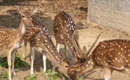 Bangabandhu Jamuna Eco Park