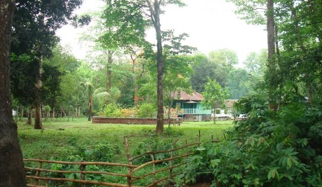 image of Kaptai National Park