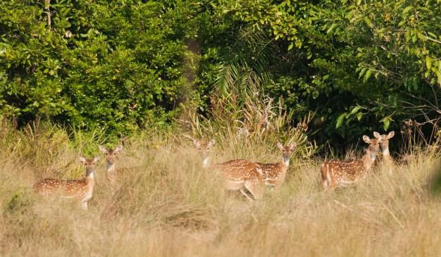 image of Sundarbans