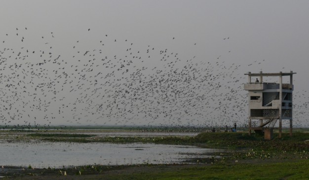 image of Baikka Beel Sanctuary
