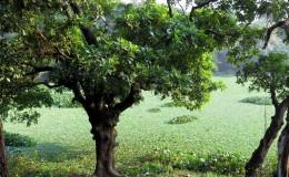 Botanical Garden, Mirpur 1
