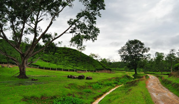 image of Sreemangal Tea Gardens