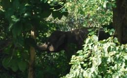 Pablakhali Wildlife Sanctuary