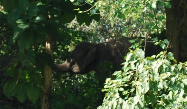 image of Pablakhali Wildlife Sanctuary
